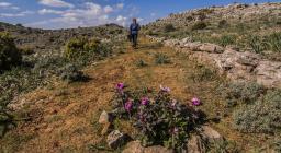 Peonia lungo un sentiero di Gairo (Cristian Mascia)