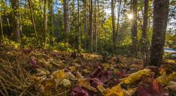 tappeto di foglie autunnali (foto Cristian Mascia)