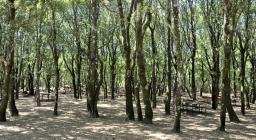 scorcio del bosco di Is Cannoneris