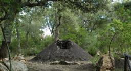 Carbonaia presso oasi Assai (Nughedu S.V.)