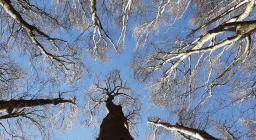 goprofor alberi toscana