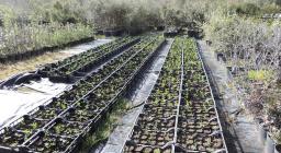 sorveglianza fitosanitaria vivaio sorgono 2