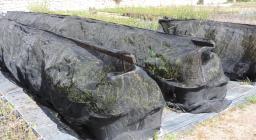 sorveglianza fitosanitaria vivaio sorgono