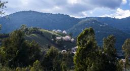 Pascoli arborati collinari, area del Gennargenti, Ogliastra (foto C.Mascia)