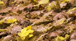 tappeto di foglie (foto C.Mascia)