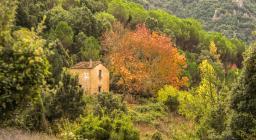 caratteristico foliage dell'acero tra i tacchi d'Ogliastra (foto C.Mascia)
