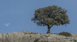 Un albero domina sul calcare (foto C.Mascia)