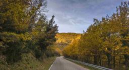 Foliage autunnale lungo una statale a valle del Gennargentu (foto Cristian Mascia)