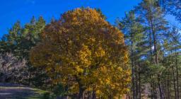 Foliage in Ogliastra (foto C.Mascia)