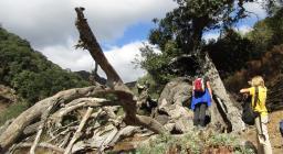 un'albero morto nel bosco di Tuviois