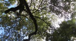 bosco di Tuviois, uno scorcio