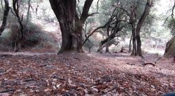 scorcio del bosco di Tuviois