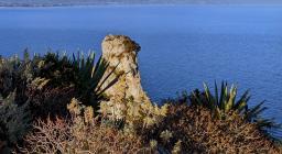 Cespugli di Euforbia, sulla sella del Diavolo (Cagliari). oltre il mare il profilo dei Settfratelli (foto A.Saba)