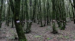 Area Forestale martelloscopio, presso Monte Arci