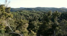 Panoramica su Pinete (pino domestico) e Leccete  di Is Cannoneris