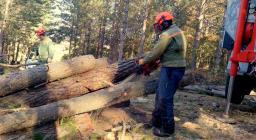 MOTOSEGHISTA Forestas in azione