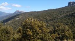 Monte Novo S.Giovanni (Orgosolo, Montes)