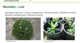 Vivaistica conservazionistica - vivaietto di Lula, specie riprodotte