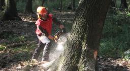 Lavori Forestali (dal sito Foritaly)