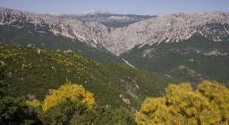 Veduta della zona montuosa di Urzulei e Dorgali (foto D.Ruiu)