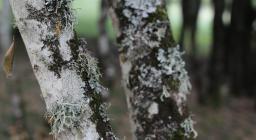 Lichene (foto Gianfranco Cossu) 2