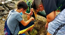 messa a dimora di alberi a Santadi, 09.2021 (2)