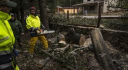intervento di ripulitura da vegetazione, motoseghisti Forestas Ogliastra
