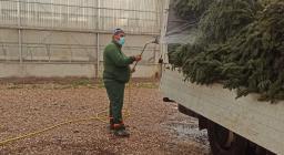 preparazione spedizione albero Assisi