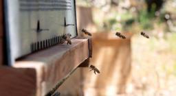 apiario Forestas Mariani (foto M.Cossu)