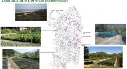 distribuzione geografica dei vivai conservazionistici Forestas