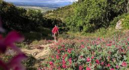 panoramica fioritura di Sulla, maggio, Albagiara (foto Alessio Saba)