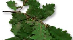 foglia roverella (da HP vecchio sito SardegnaForeste)