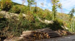 legname accatastato dopo il taglio (foto progetto SAM)
