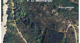 mappa particella Montarbu