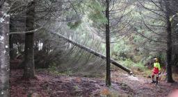 taglio albero per assisi