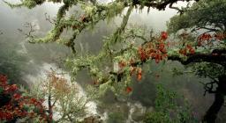 Muschi e licheni, cascata Mularza noa, Bolotana (foto D.Ruiu)