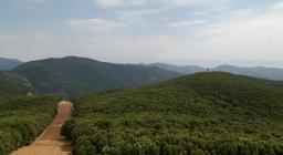 Panorama sulla fascia parafuoco nel territorio della Foresta Pantaleo