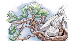 quaderno del bosco insegnanti scuola media
