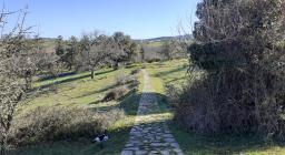 sentiero in zona foresta burgos