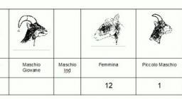 tabella mufloni limbara, monitoraggio 2019