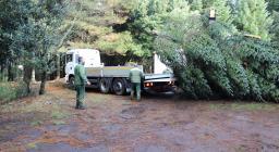 trasporto albero per assisi
