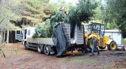 trasporto albero da bosco per assisi