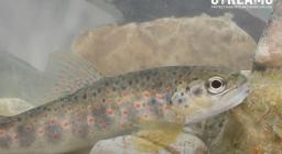 life streams anteprima video