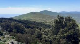 vista sui boschi del goceano
