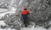 Operaio impegnato nella rimozione albero caduto a causa di forte nevicata