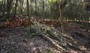 Legname proveniente dal diradamento degli alberi