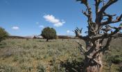 Montes, Prateria sull'altipiano di Campu su Mudrecu - foto Horusfilms
