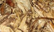 Campioni di cippato di tronco con corteccia