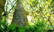 Foresta interna nel Goceano