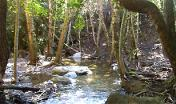 Il Rio Ermolinus all'interno della foresta di Montarbu